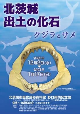『クジラとサメ①』の画像